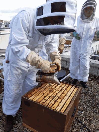 Julhiet Sterwen et ses abeilles