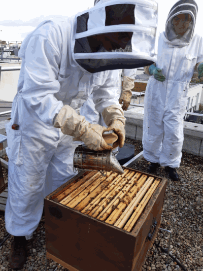 Apiculteur visite des ruches Julhiet Sterwen