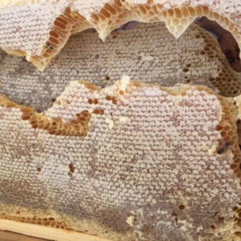 Les ruches de Julhiet Sterwen